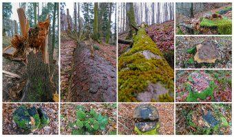 Photos natures d'arbres à terre et de souches.