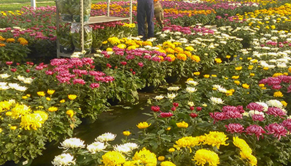 Une jeune personne autiste qui travaille avec son tuteur dans une horticulture.