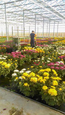 Jeune diplômé, souffrant de troubles autistiques, en période d'essai dans une horticulture.